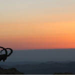 An Ibex watches the sun rise