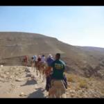 Negev Desert Camel Ride